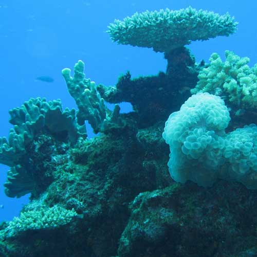 National Fish & Wildlife Foundation's Coral Fund