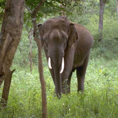Asian Rhino and Elephant Program Evaluation