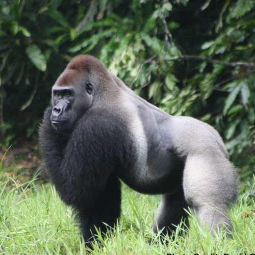 Ebo Landscape and Jengi Forest, WWF Cameroon