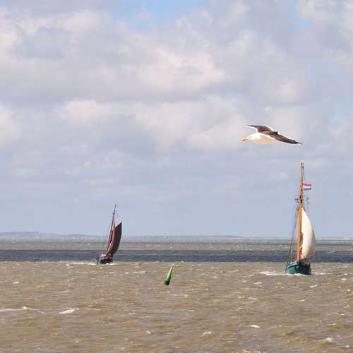 Multi-Stakeholder Planning in the Wadden Sea