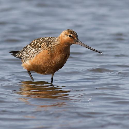 Birdlife Netherlands