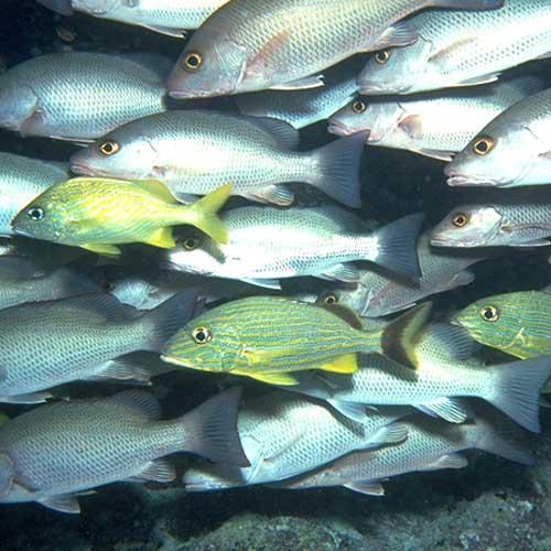 Ocean Conservancy's Overfishing Scorecard